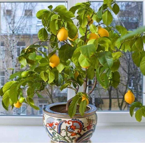 Цитрусовые растения полезны для детей