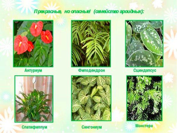 Вредные для детей растения