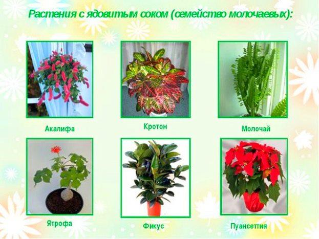 Список опасных для детей растений